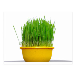 Postal Hierba del trigo