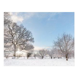 Postal Hilera de árboles nevada con salida del sol de la