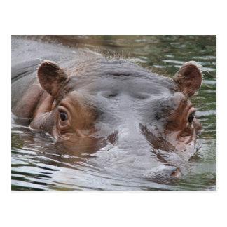 Postal Hipopótamo
