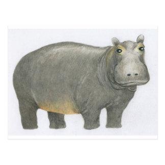 Postal Hipopótamo básico