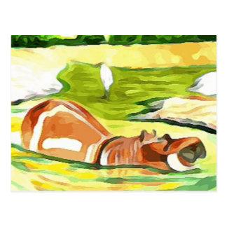 Postal Hipopótamo del safari