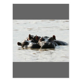 Postal Hipopótamos