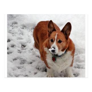 Postal Hocico de la nieve de Charlie