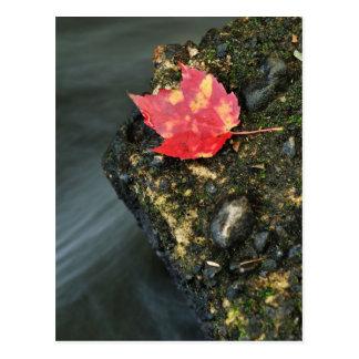 Postal Hoja del otoño