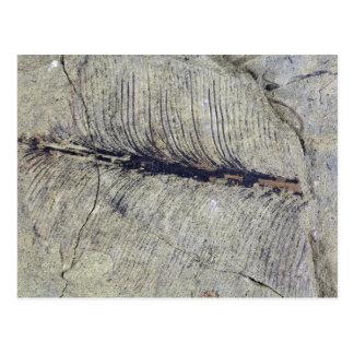 Postal Hoja fósil frágil de la planta