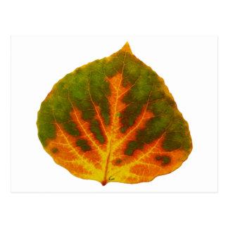 Postal Hoja verde #1 de Aspen del naranja y del amarillo