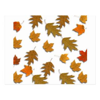 Postal Hojas de arce del otoño