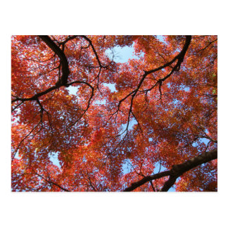 Postal Hojas de arce japonesas en otoño