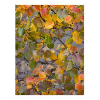 Postal Hojas de otoño