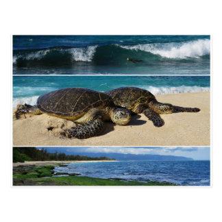 Postal Honu, tortuga de mar verde hawaiana, Oahu, orilla