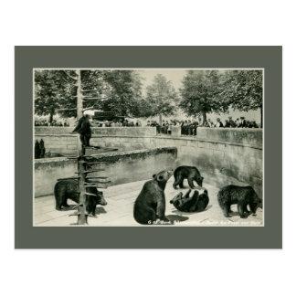 Postal Hoyo del oso del vintage en la foto de Berna