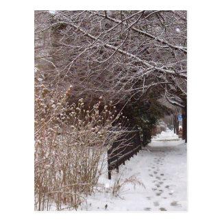 Postal Huellas en la nieve