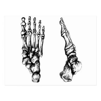 Postal Huesos del foor. humano