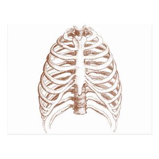 Postal huesos humanos