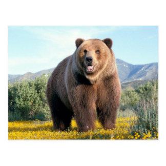 Postal Huge Brown Bear