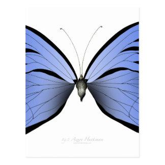 Postal Huntsman azul del azul de la mariposa 2