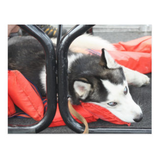 Postal Husky siberiano que intenta nap en un barco