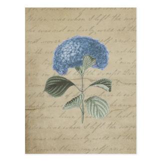 Postal Hydrangea azul del vintage con caligrafía antigua