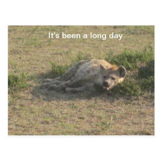 Postal Hyena africano