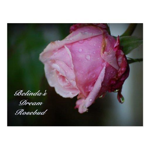 Postal ideal del capullo de rosa de Belinda