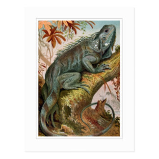 Postal Iguana