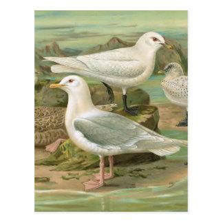 Postal Ilustracion del pájaro del vintage de Islandia y