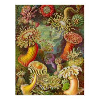 Postal Ilustracion del vintage de las anémonas de mar