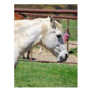 Postal ilustraciones del lápiz del caballo blanco