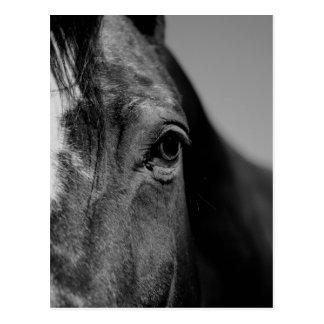 Postal Ilustraciones negras del ojo del caballo blanco