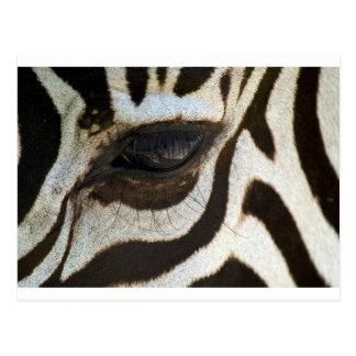 Postal Imagen serena linda del ojo de la cebra