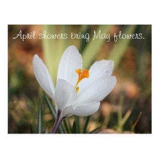 Postal IMG_0371, duchas de abril traen las flores de mayo