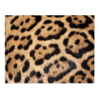 Postal Impresión de la foto de la piel de Jaguar