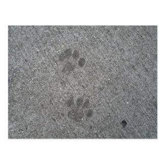 Postal Impresiones del gatito