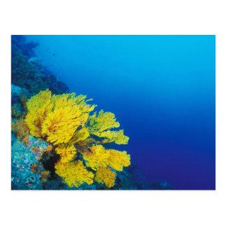 Postal Indonesia, islas de Banda, arrecifes de coral