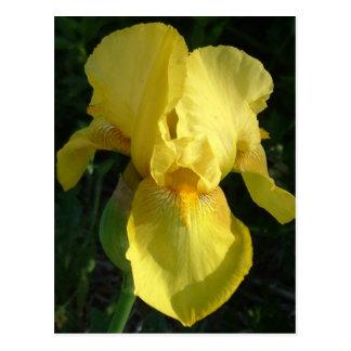 Postal Iris amarillo