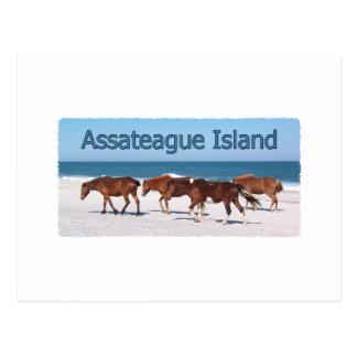 Postal Isla de Assateague (potros en logotipo de la