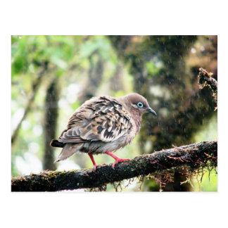 Postal Isla de Santa Cruz, las Islas Galápagos, pájaro en