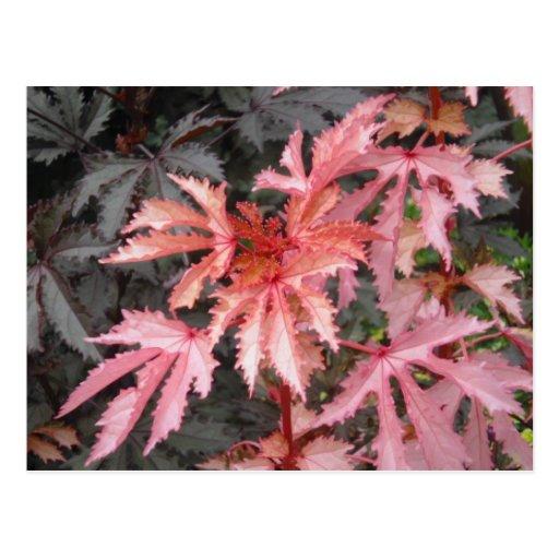 Postal japonesa de las hojas de arce