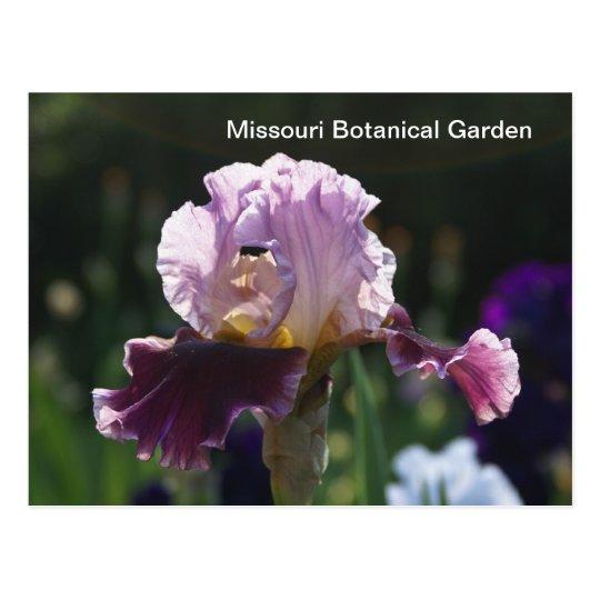 Postal Jardín-Iris botánico de Missouri