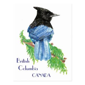 Postal Jay estelar, Columbia Británica, pájaro,