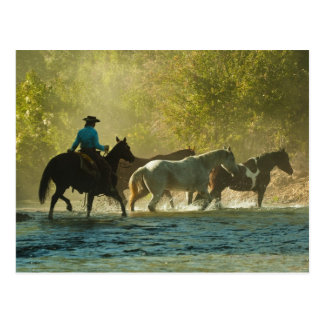 Postal Jinete de lomo de caballo que reúne caballos