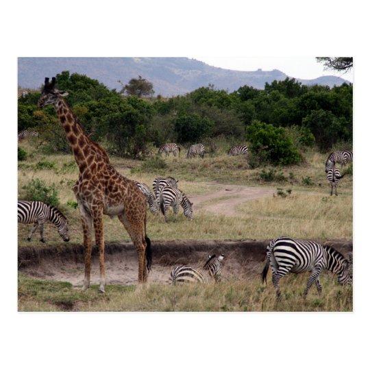 Postal jirafa y cebra