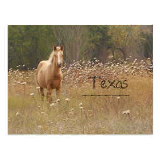 Postal joven de Tejas del caballo del país