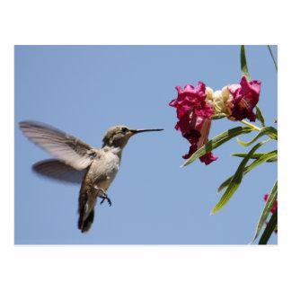 Postal joven del colibrí