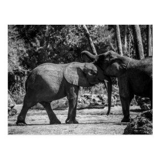 Postal juguetona de los elefantes