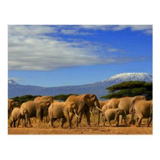 Postal Kilimanjaro y elefantes