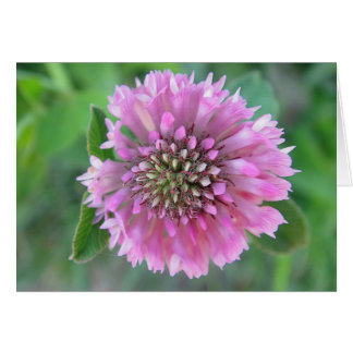 Postal Kleeblüte excepcional, rosa, en blanco Tarjeta De Felicitación