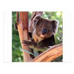 Postal Koala del Victorian