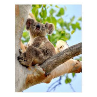 POSTAL KOALA EN EL ÁRBOL QUEENSLAND AUSTRALIA