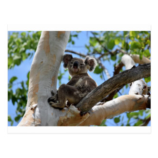 POSTAL KOALA EN EL ÁRBOL QUEENSLAND RURAL AUSTRALIA
